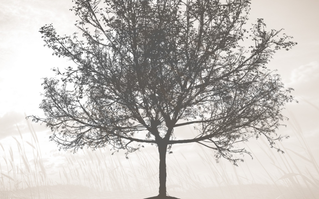 Seasons_CoverArt_Front